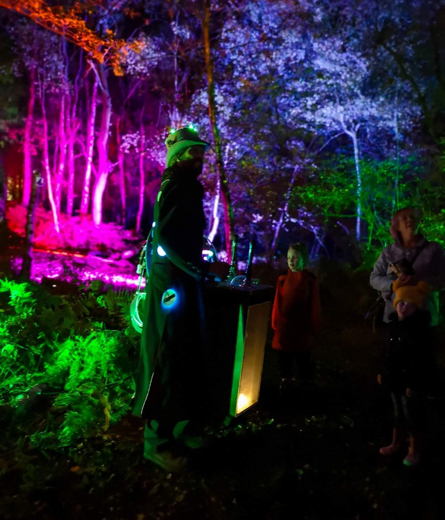 not just a tit magical woodland experience lighting magician