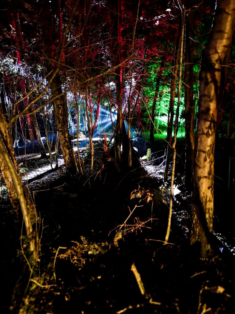 not just a tit magical woodland experience light through trees