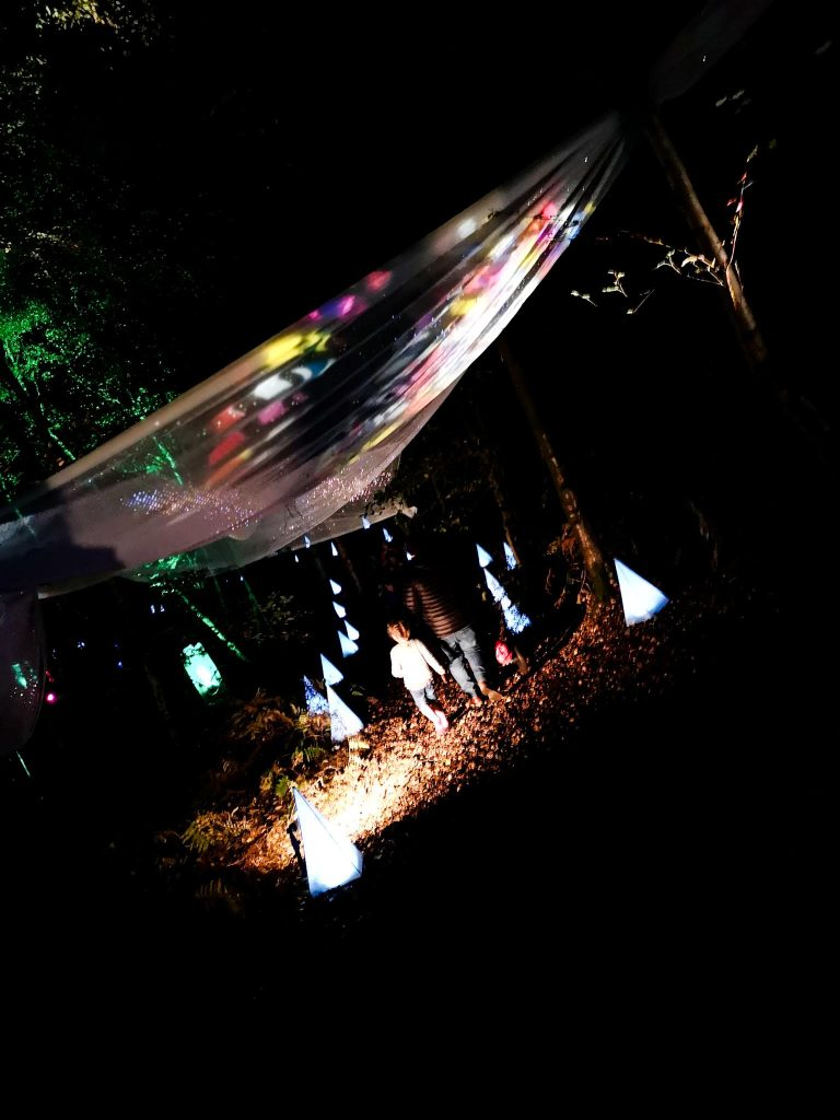 not just a tit magical woodland experience forest path light show