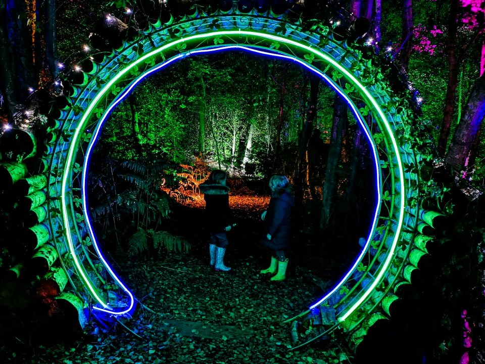 magical woodland experience not just a tit cheshire light show