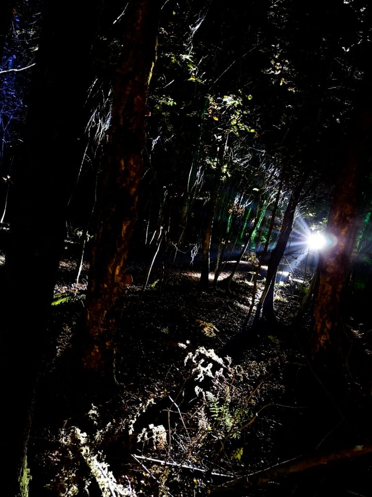 not just a tit magical woodland experience light through trees eerie