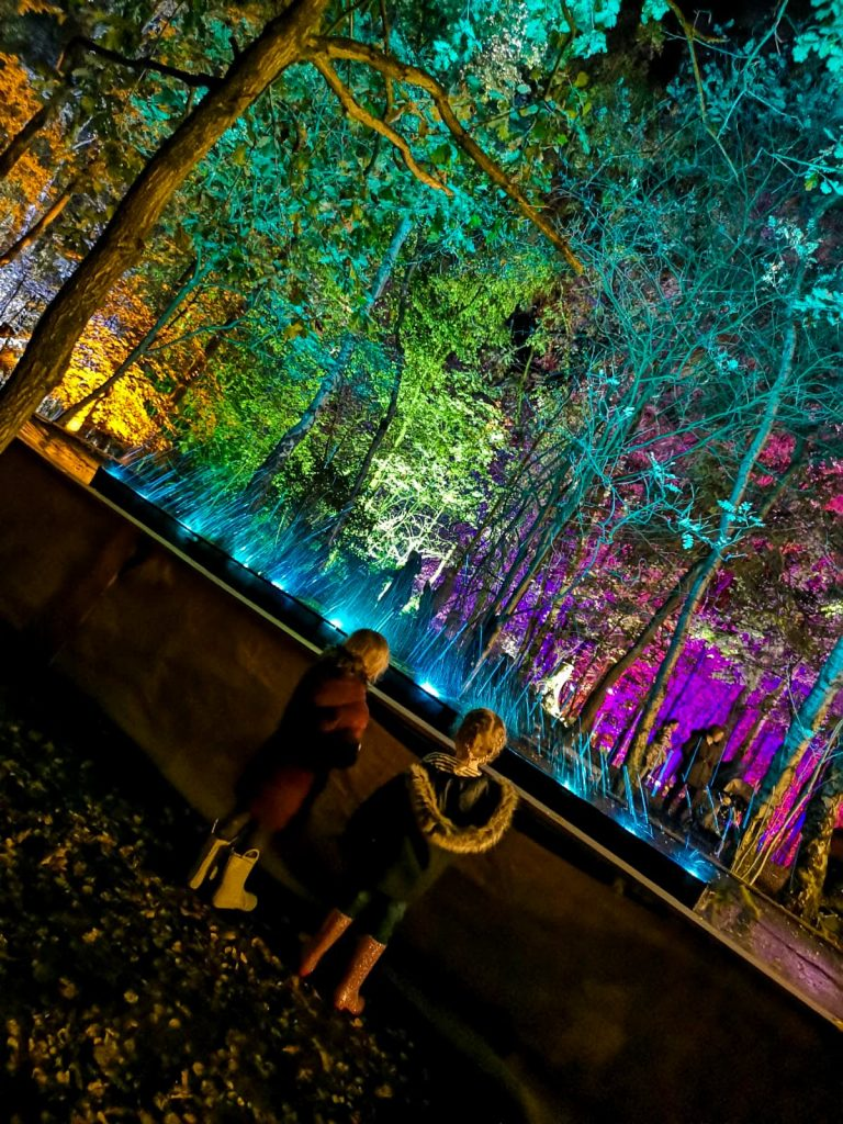 not just a tit magical woodland experience water light show children