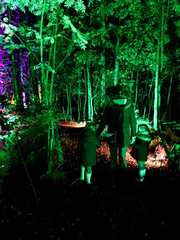 not just a tit magical woodland experience holding hands through the forest