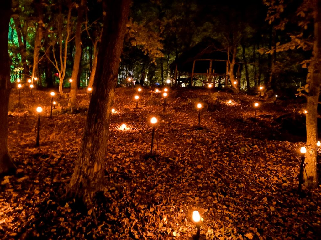 not just a tit magical woodland experience harry potter orange lights