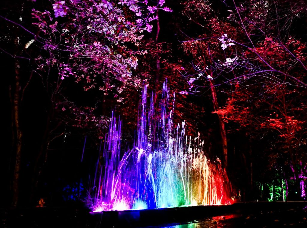 not just a tit magical woodland experience water light show middle of the forest