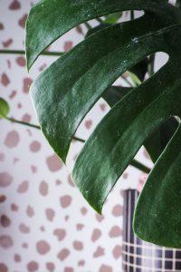 """monstera leaf against spotty background easy care houseplant notjustatit interiors blog"""