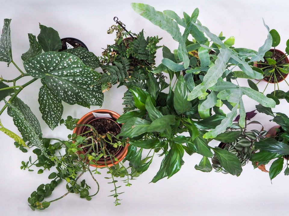 """easy care houseplants in bath notjustatit interiors blog"""
