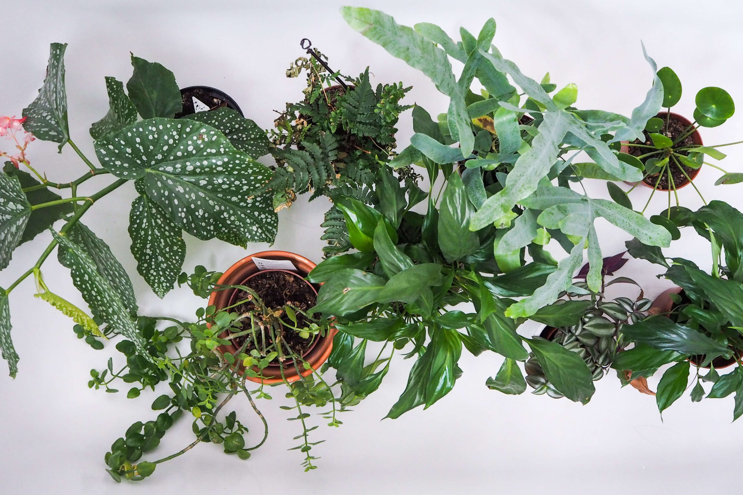 FIVE easy care houseplants to add to your home
