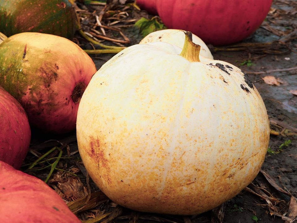 autumn baking pumpkins header image notjustatit