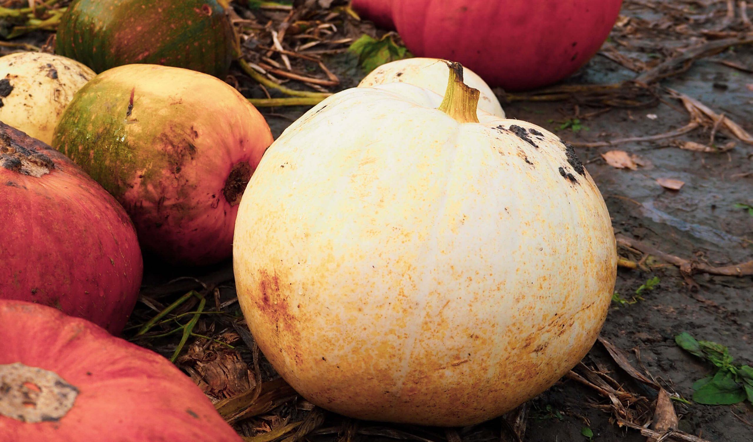 Autumn baking: Pumpkins